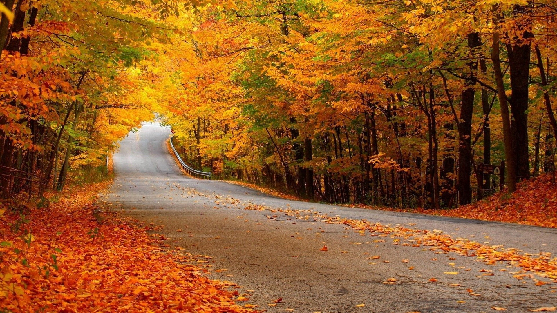 Res: 1920x1080,  0  Autumn Forest Scenery Wallpaper  Autumn  Forest Street Wallpaper