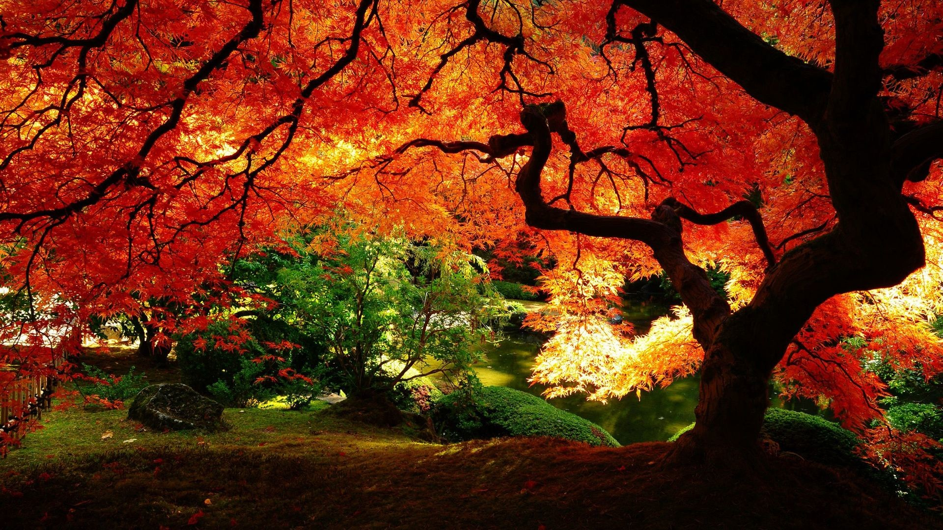 Res: 1920x1080, High Resolution Tree Autumn Wallpaper HD Full Size - SiWallpaperHD .
