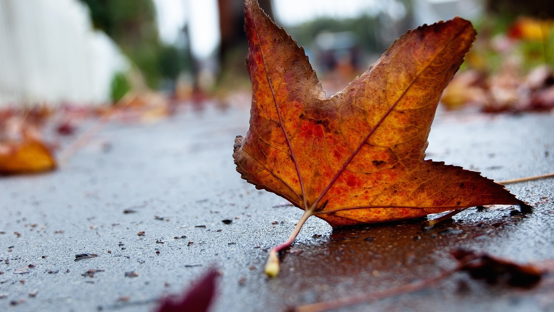 Res: 1920x1080,  Autumn Leaf Macro. How to set wallpaper on your desktop? Click  the download link from above and set the wallpaper on the desktop from your  OS.