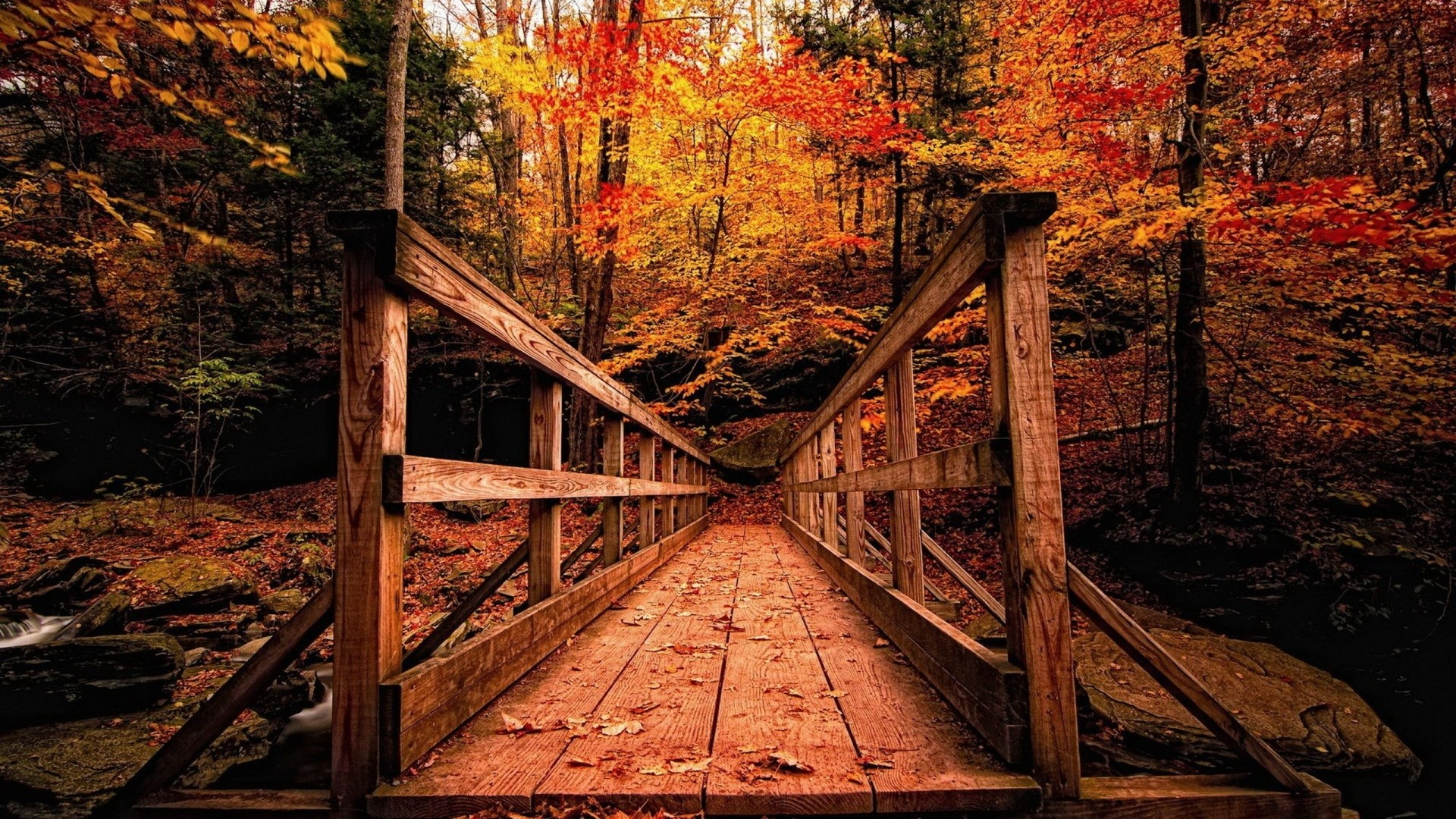 Res: 1920x1080, Nature HD Image Wallpaper wooden structure forest autumn 84511