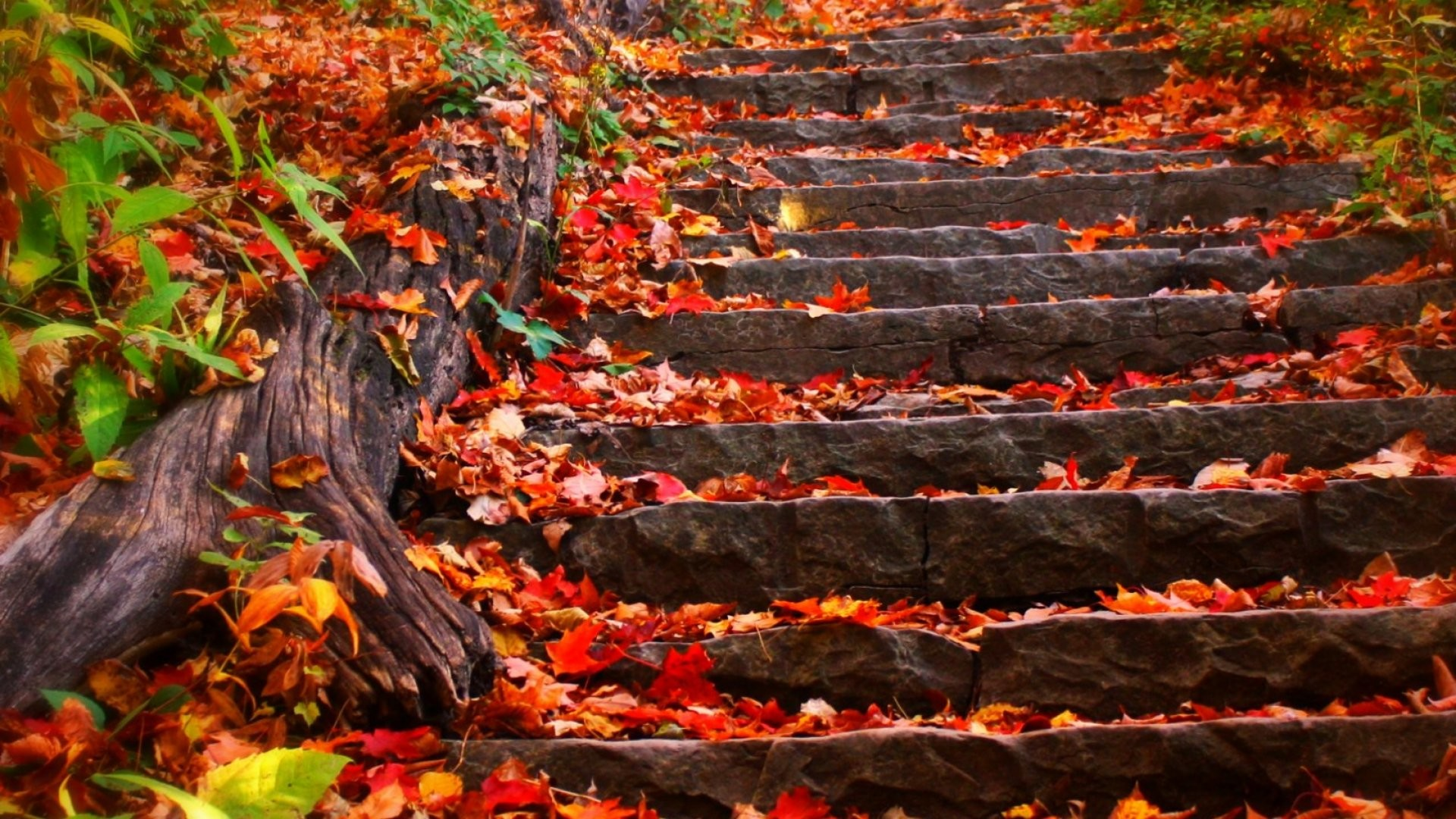 Res: 1920x1080, Autumn steps fall foliage leaves wallpaper      524349    WallpaperUP