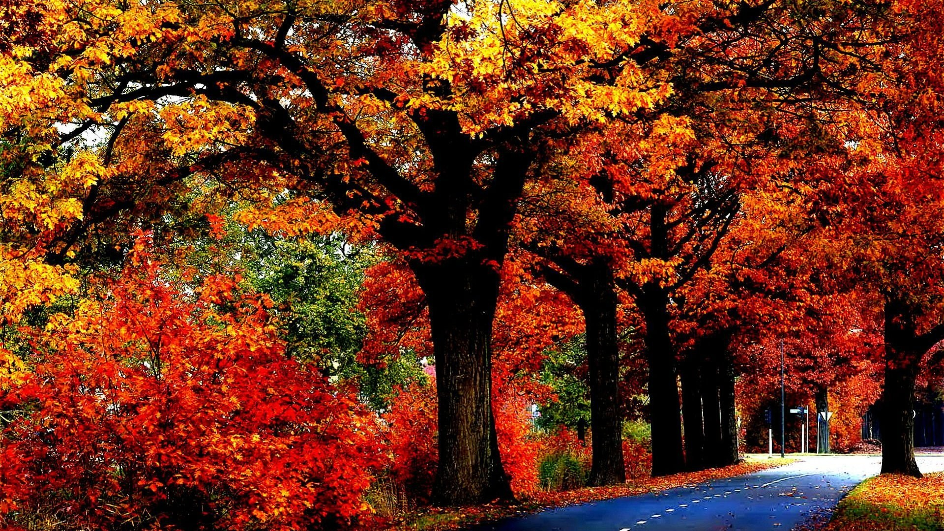 Res: 1920x1080, Tree Leaves Autumn Fall Nature Landscape Forest Wallpapers Hd 1080p Detail