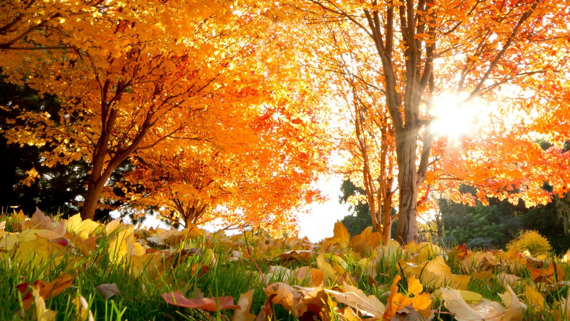 Res: 1920x1080, fall, trees, leaves