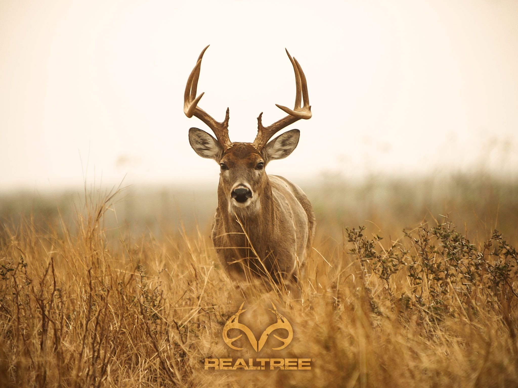 Res: 2048x1536, I would like to go hunting and kill me a big deer that is huge.