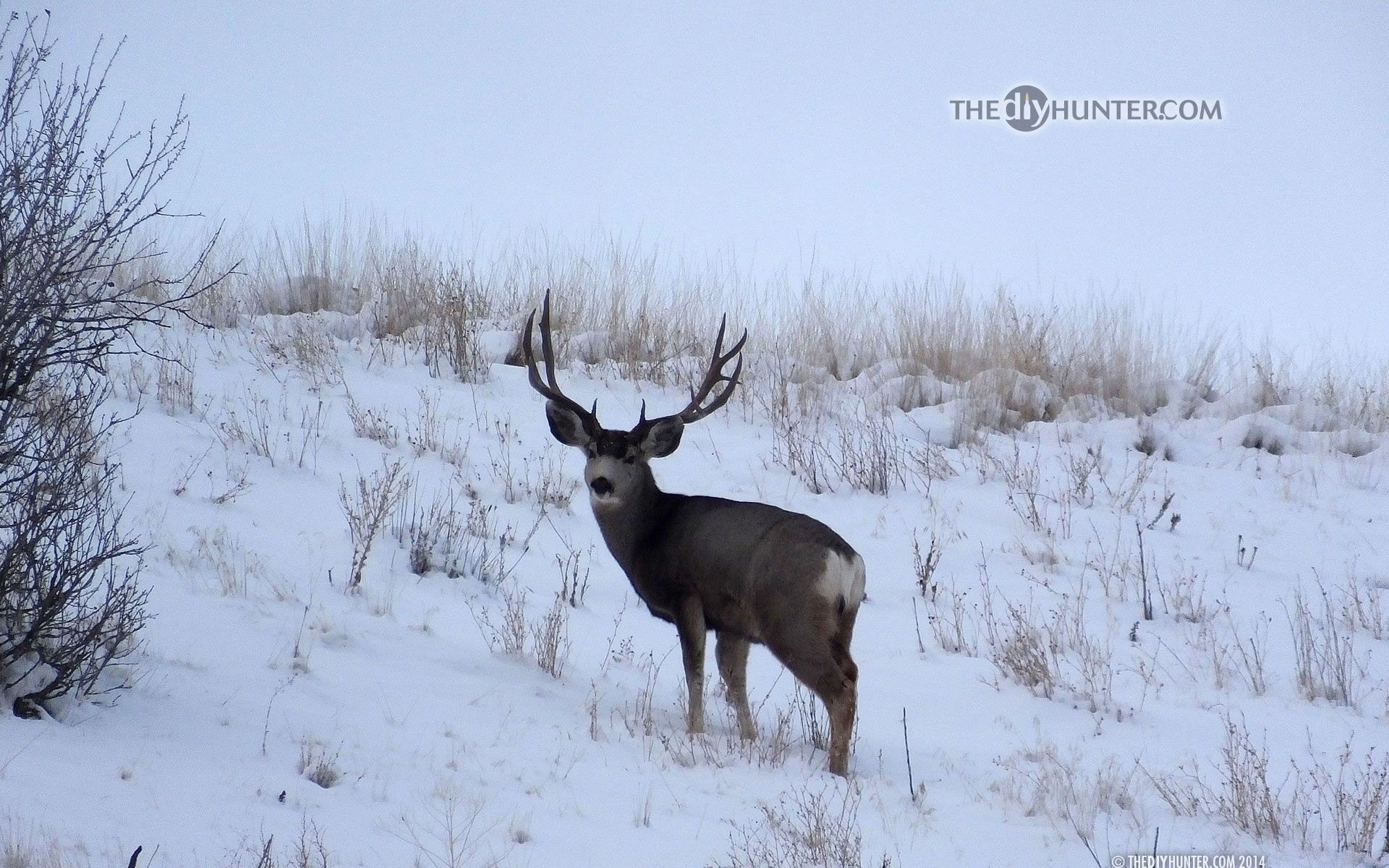 "Res: 1920x1200, Search Results for ""big buck in snow wallpaper"" – Adorable Wallpapers"