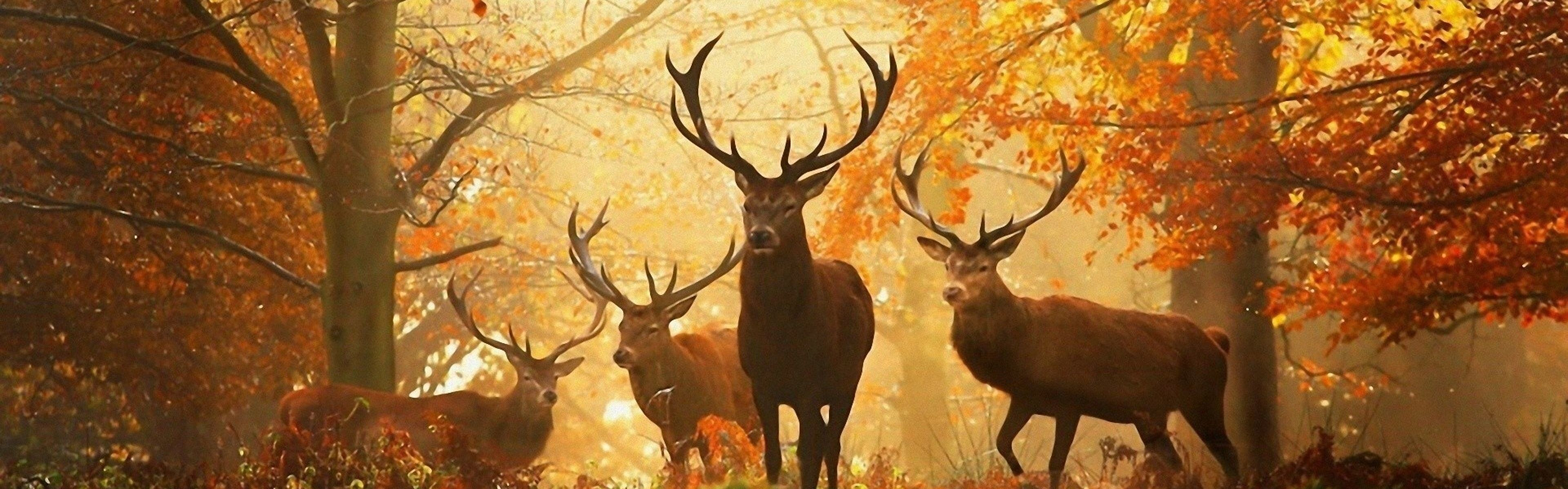 Res: 3840x1200, Deer Wallpapers Best Inspirational High Quality Deer