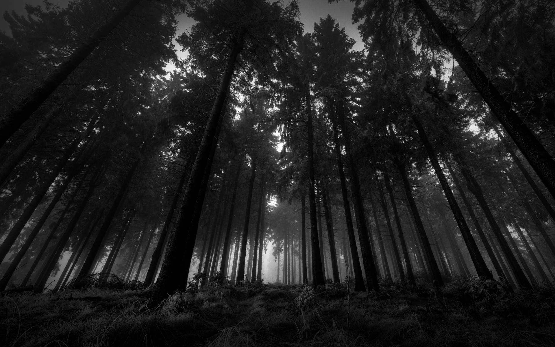 Res: 1920x1200, Wood clipart forest wallpaper #5