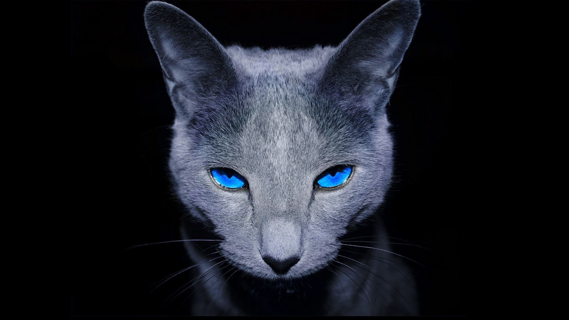 Res: 1920x1080, Black-animal-wallpaper-with-dark-gray-cat-with-blue-eyes.jpg