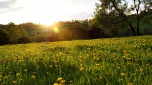 Spring Meadow wallpapers