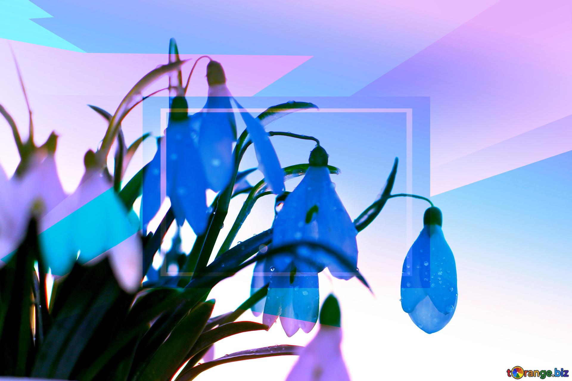 Res: 1920x1280, For the desktop background wallpaper spring Snowdrop Blue blank  illustration template geometric frame