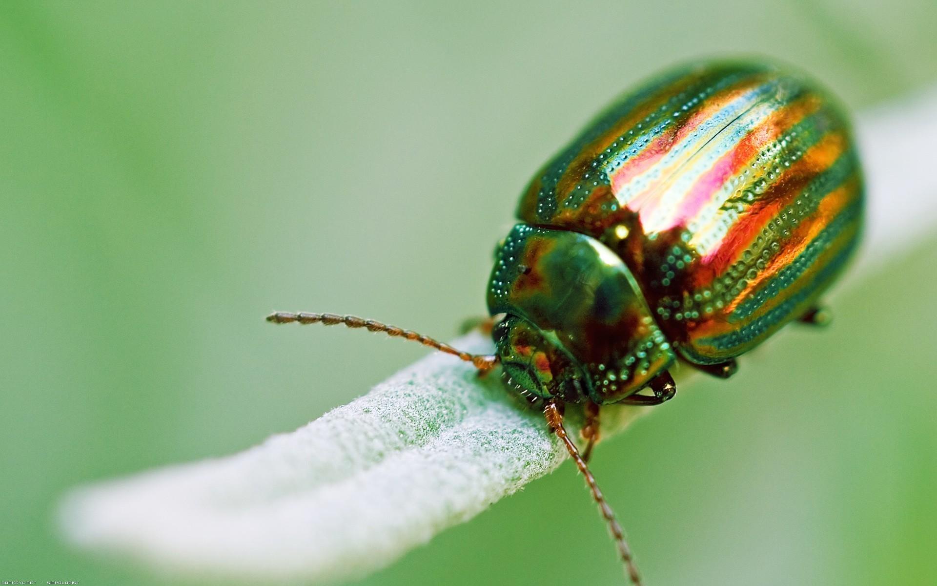Res: 1920x1200, Bild: Faszinierende Bug wallpapers and stock photos. Â«