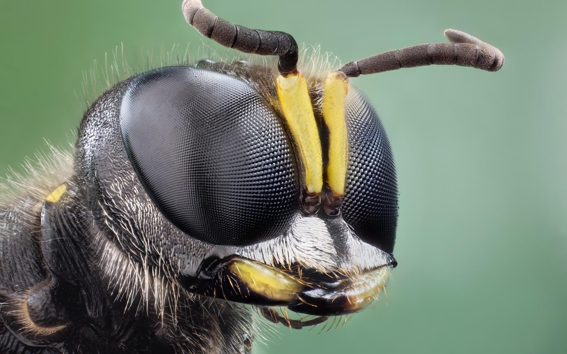 Res: 1920x1200, Bug Augen wallpaper