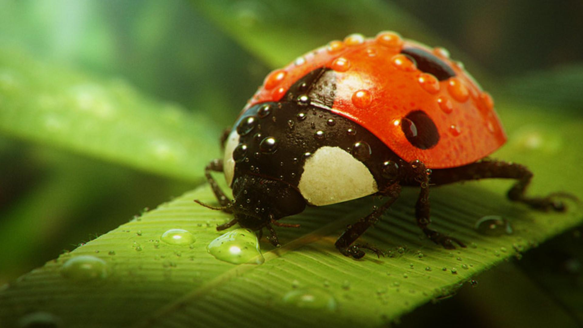 Res: 1920x1080, Lady-Bug-Wallpaper-HD ...