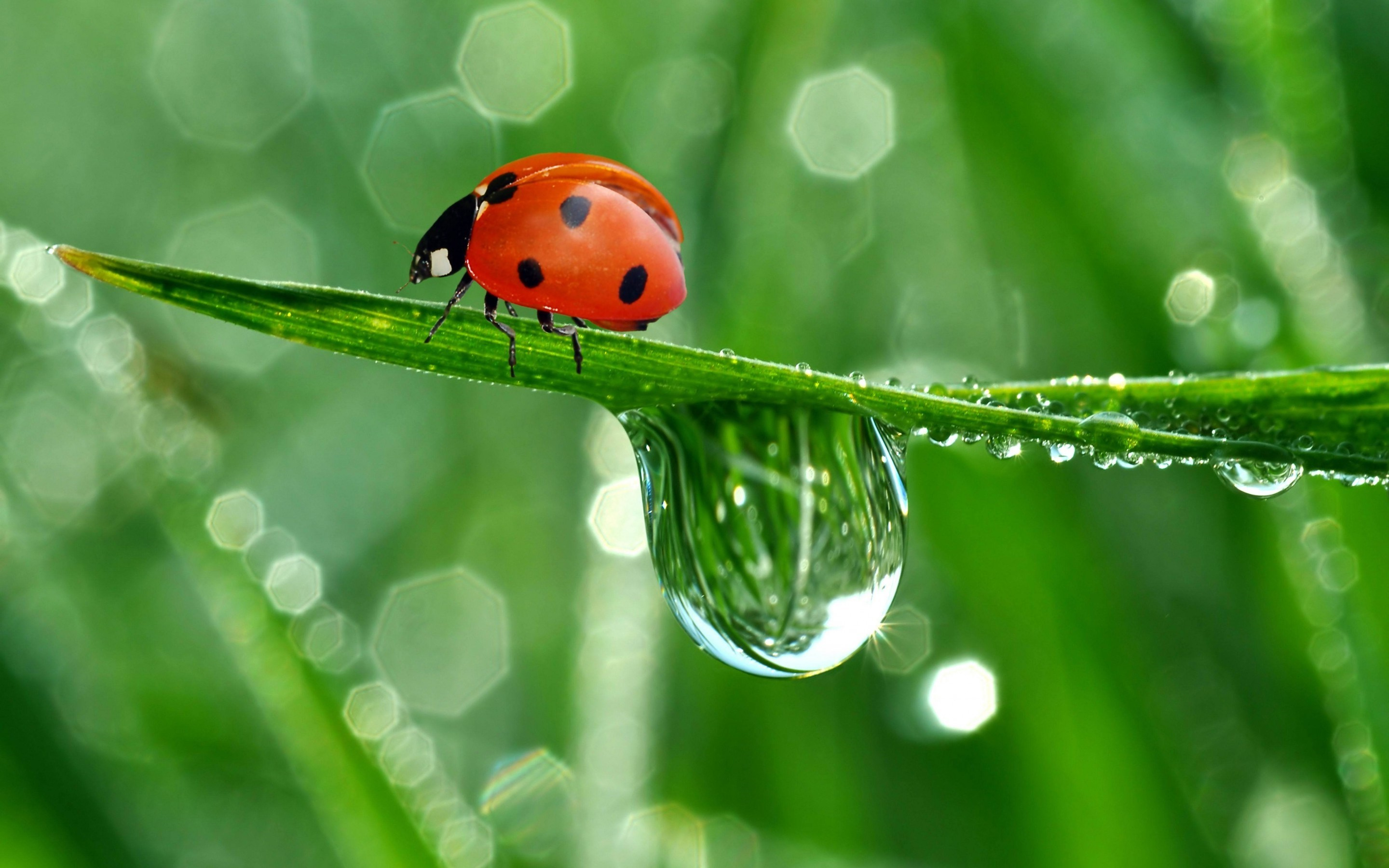 Res: 2880x1800, Lady Bug Wallpaper HD Lady Bug Water Leaves Pictures