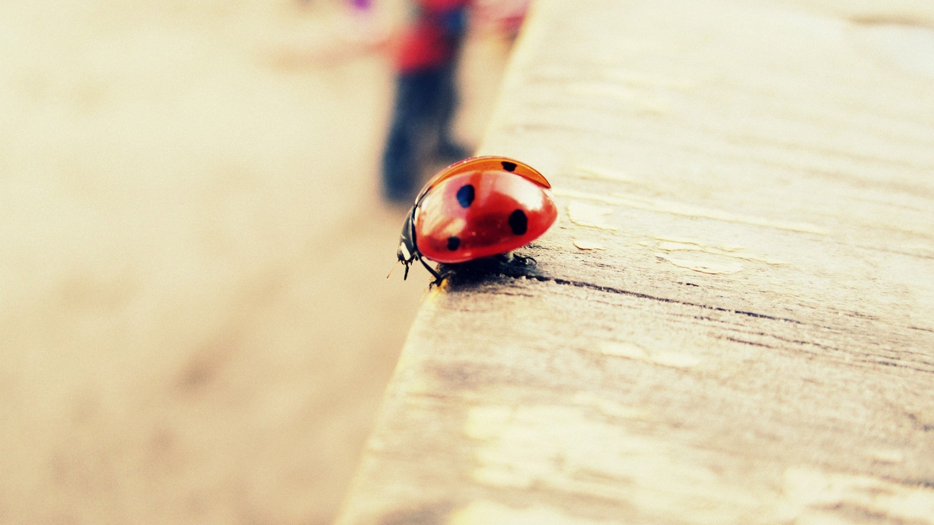 Res: 1920x1080, Ladybug Wallpaper For Free