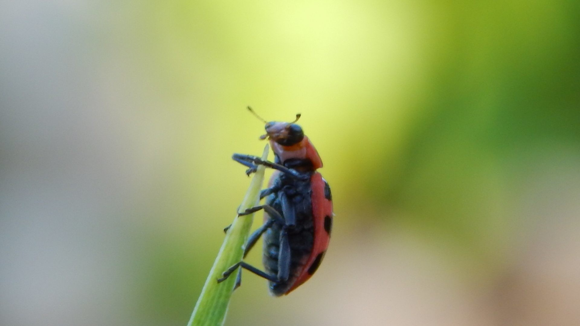 Res: 1920x1080, 487 Insect HD Wallpapers | Background Images