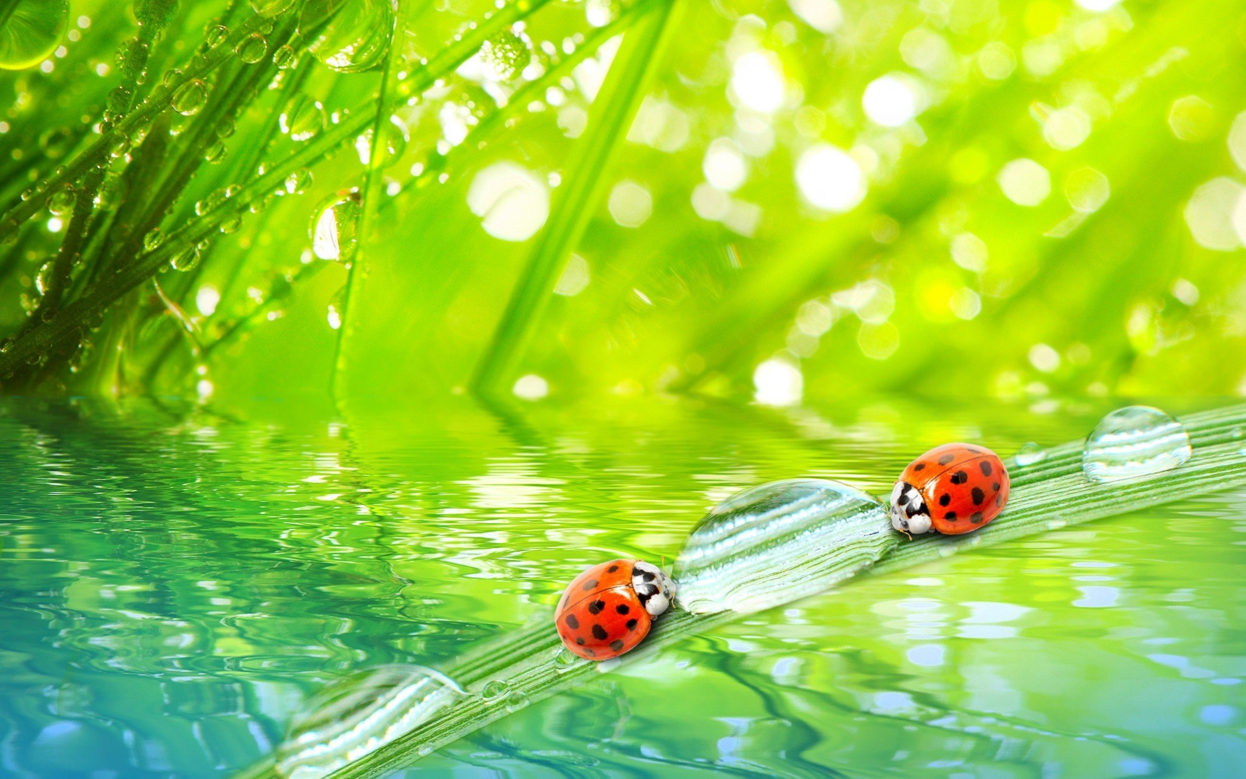 Res: 2560x1600, High Definition,amazing, Nature, Download Windows Wallpapers,grass,  Ladybags, Bug, Water