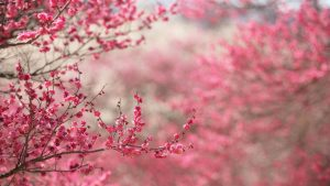 Pink Nature wallpapers