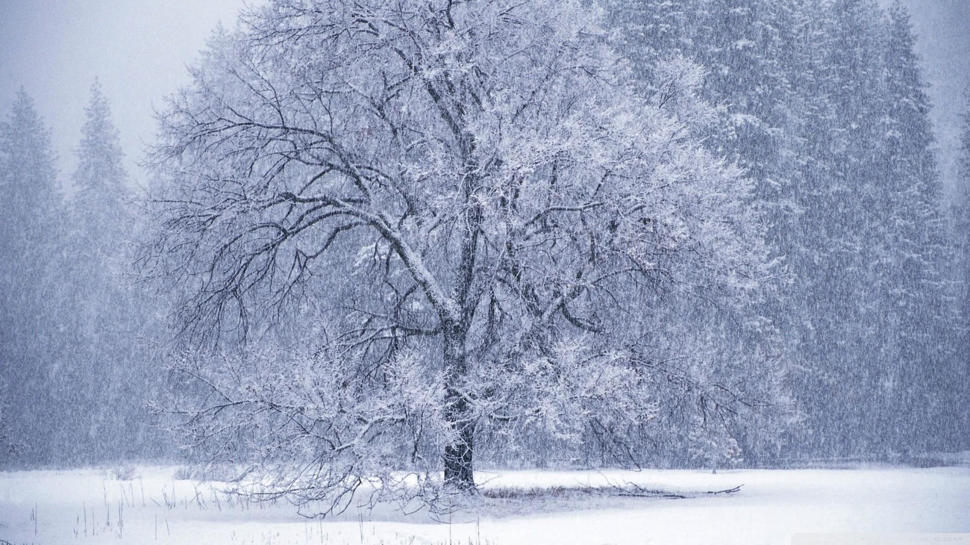 Res: 1920x1080, snow falling wallpaper