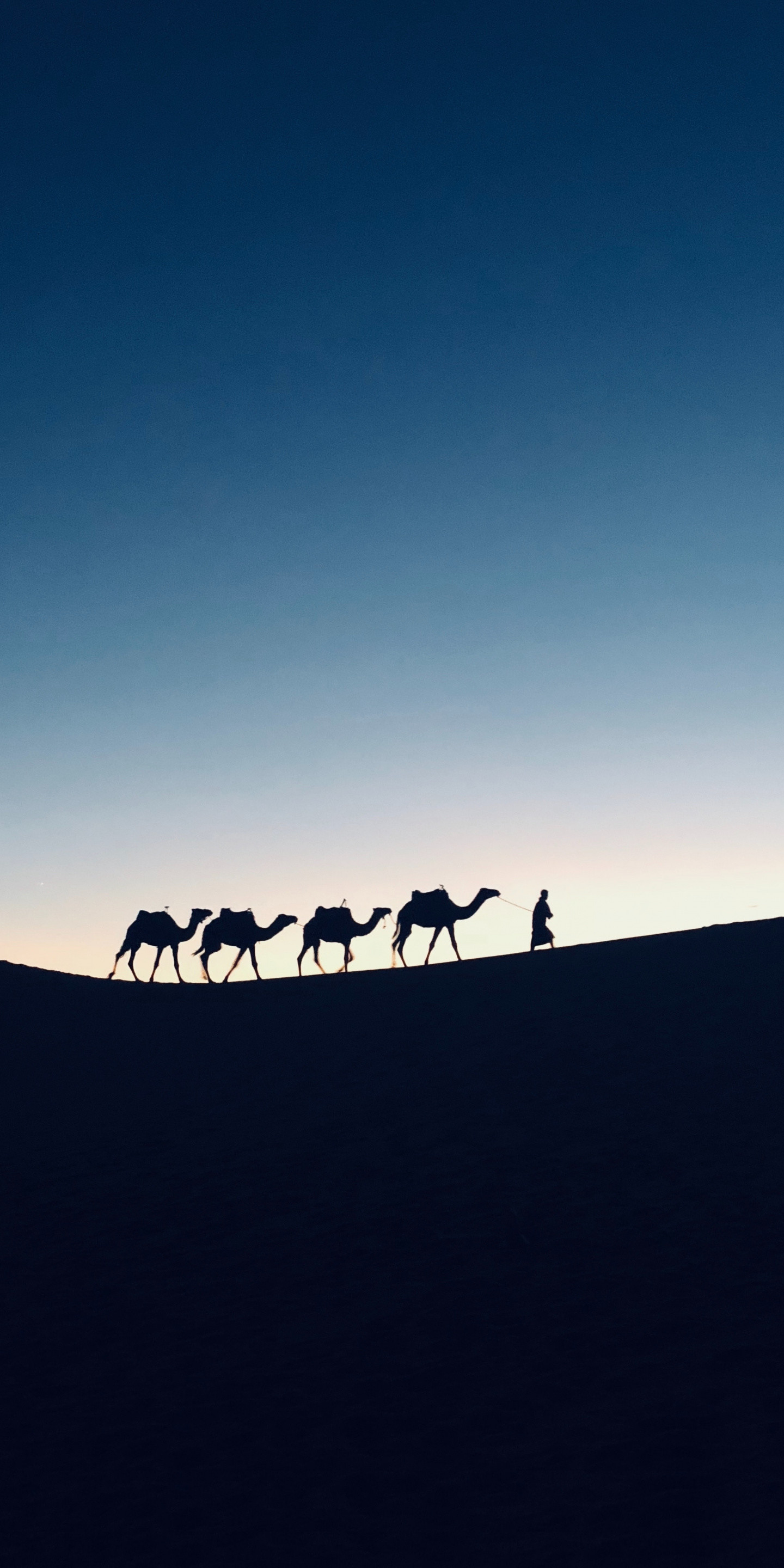 Res: 1440x2880, Silhouette, sunset, camel, Morocco,  wallpaper