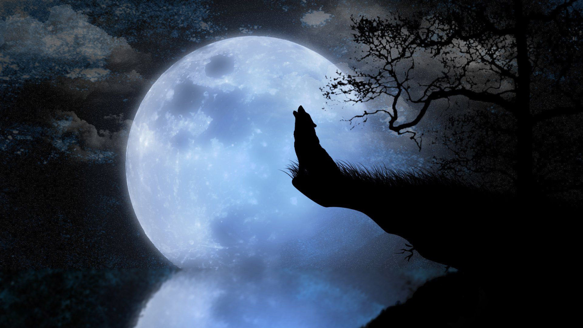 Howling Wolf Wallpapers Hd Wallpaper Collections 4kwallpaper Wiki