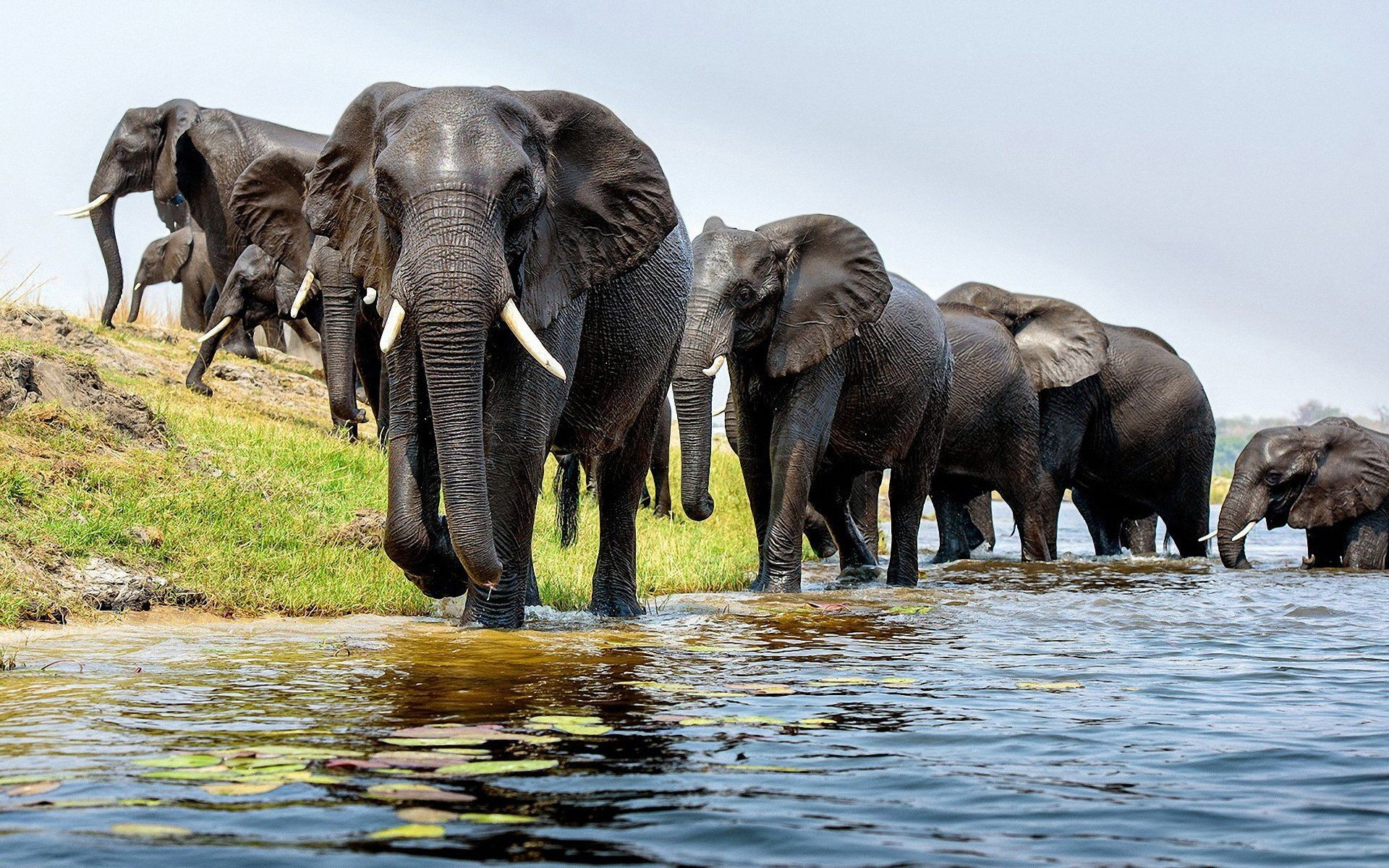 Res: 1920x1200, Elephant HD Wallpapers Backgrounds Wallpaper