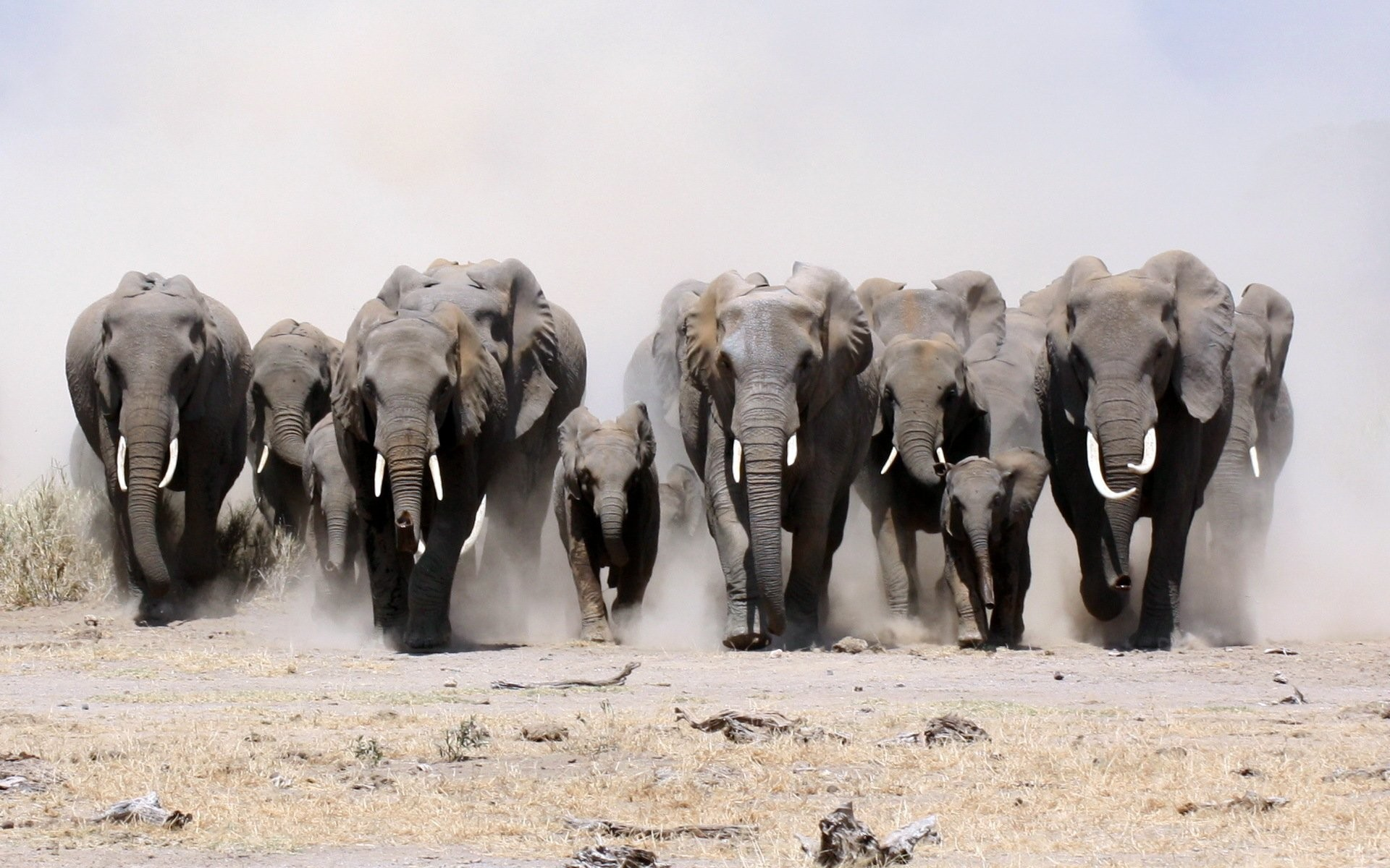 Res: 1920x1200, HD Wallpaper | Background Image ID:339811.  Animal Elephant