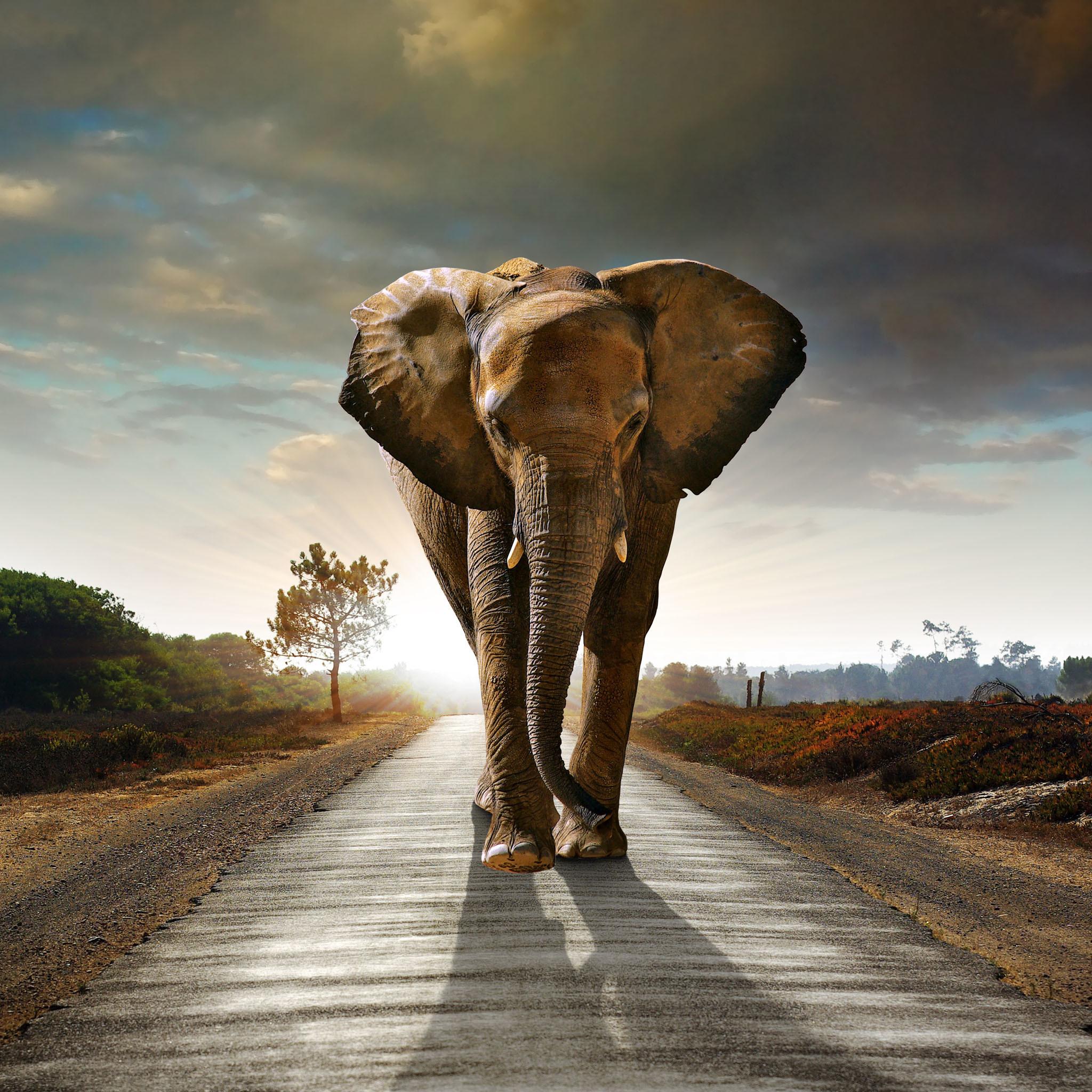 Res: 2048x2048, Elephant HD Wallpapers Desktop Pictures