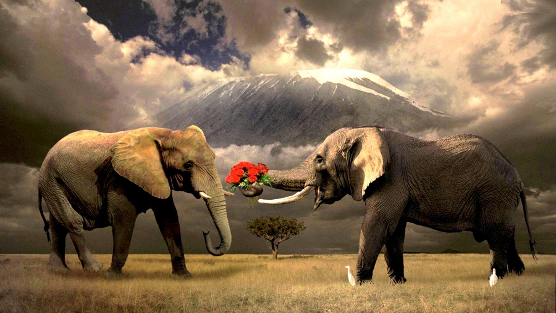 Res: 1920x1080, hd elephant wallpaper | 1080p Wallpapers, Hd Wallpapers, Pictures .