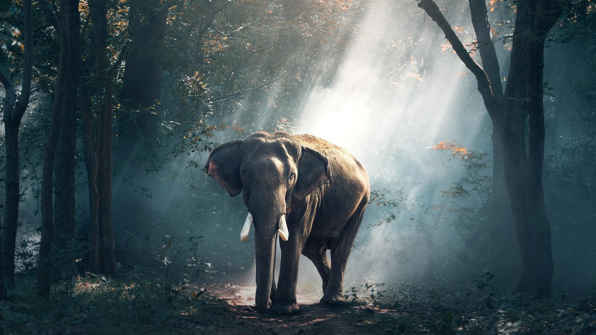 Res: 1920x1080, elephant-s2.jpg