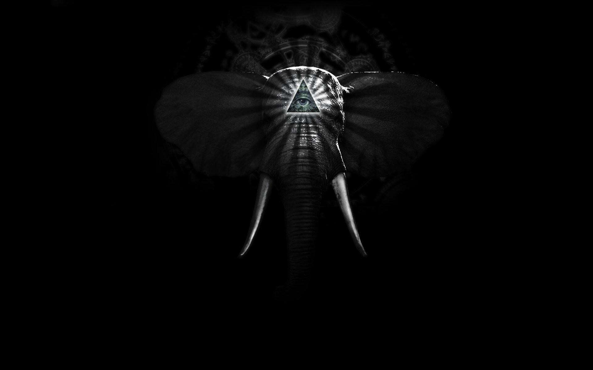 Res: 1920x1200, Background web elephant hd.