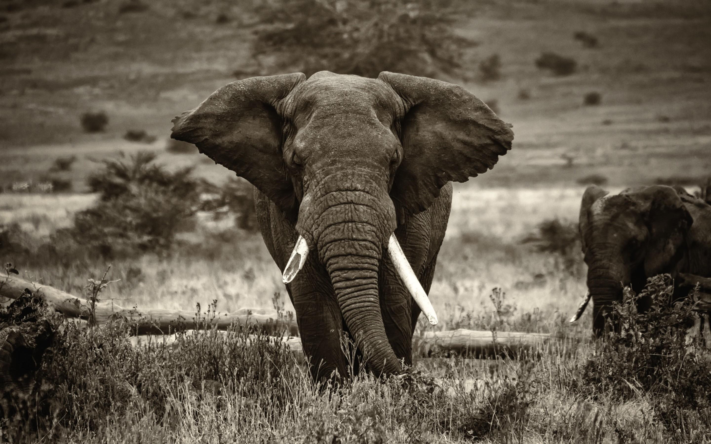 Res: 2880x1800, 1920x1200 Bild: Ethnische Elefant wallpapers and stock photos. Ã'Â«