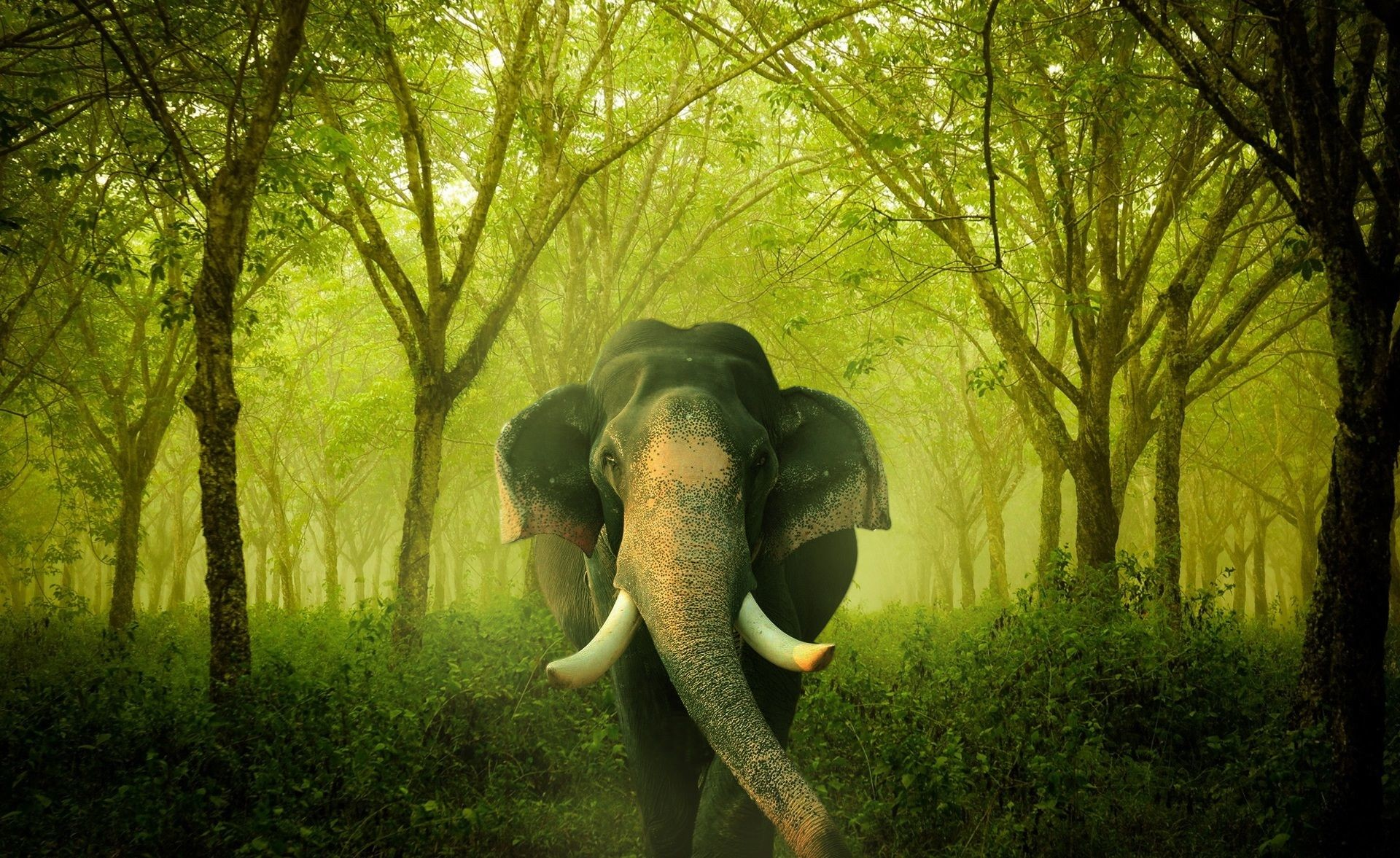 Res: 1920x1177, Elephant HD Wallpapers