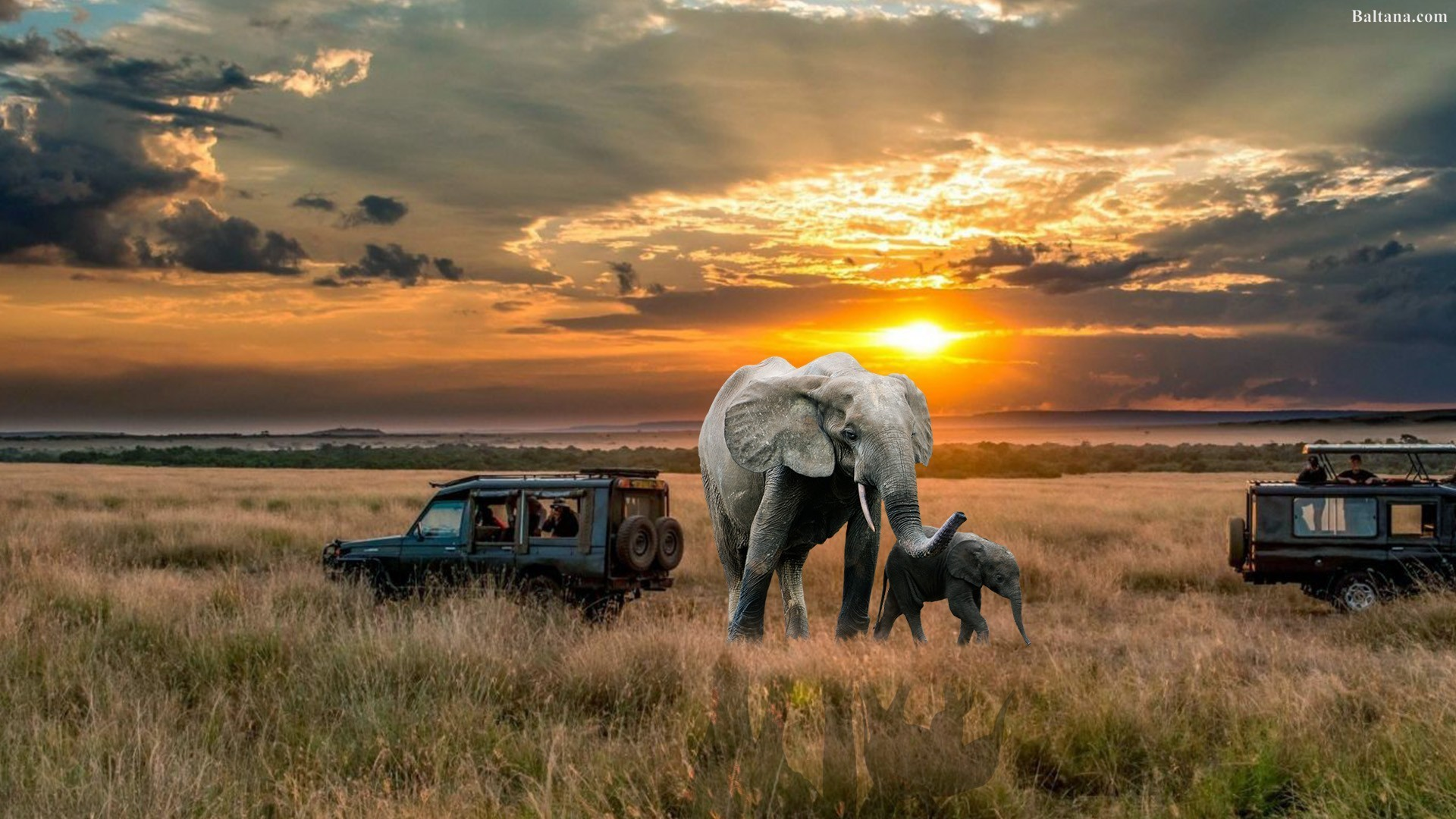 Res: 1920x1080, Elephant HD Desktop Wallpaper 29725
