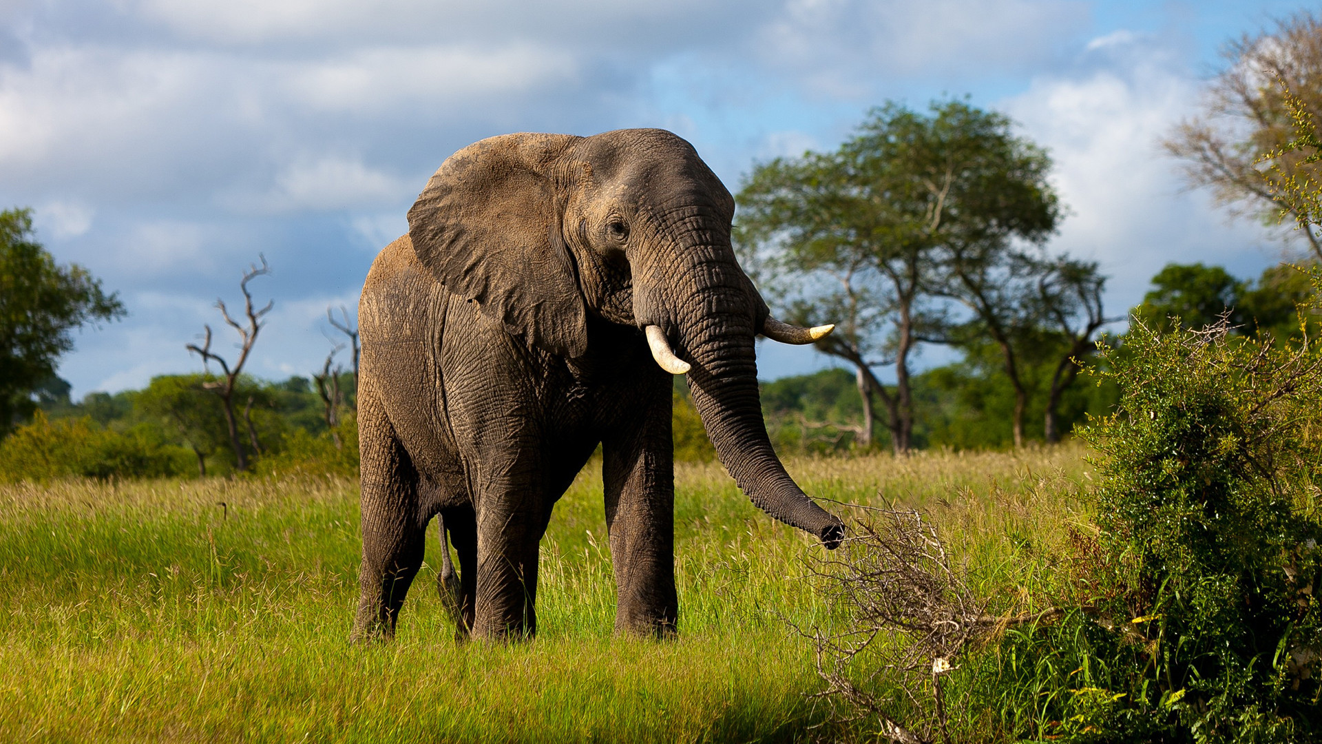 Res: 1920x1080, Animals Indian elephant Pics HD Wallpapers