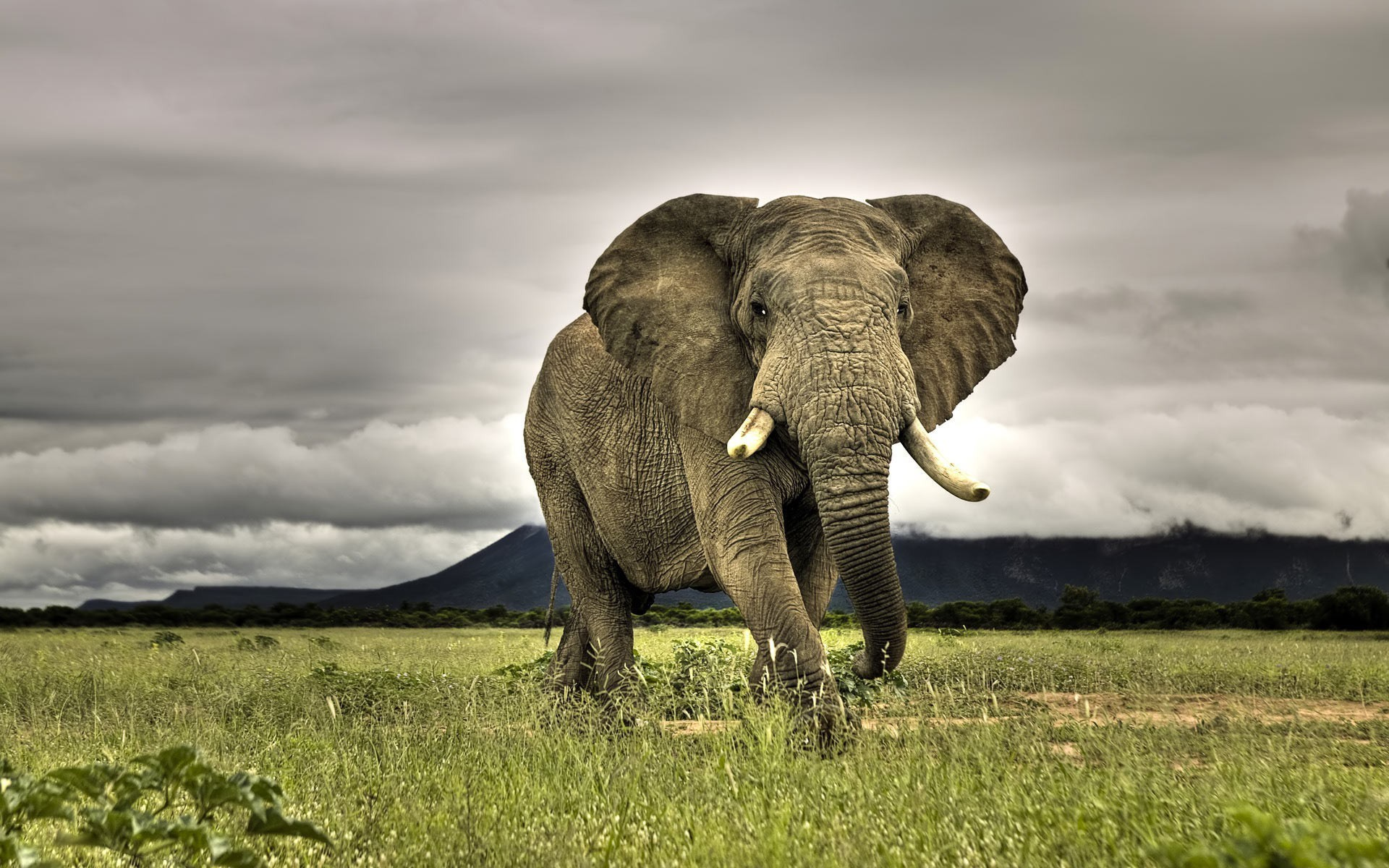 Res: 1920x1200, African Elephant Pictures HD HD Wallpapers Desktop Images Download Free  Windows Wallpapers Picture Artwork Lovely