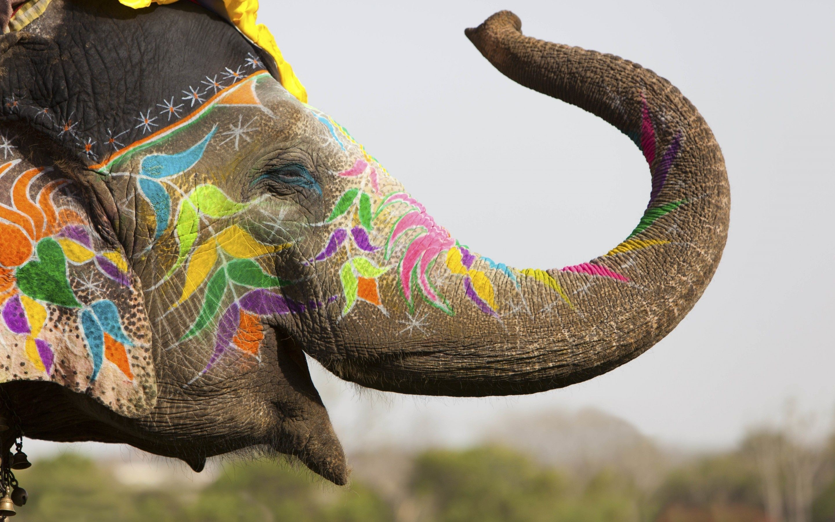 """Res: 2880x1800, 1600x900 Free Elephant Wallpaper High Quality Resolution Â« Long Wallpapers"""">"""
