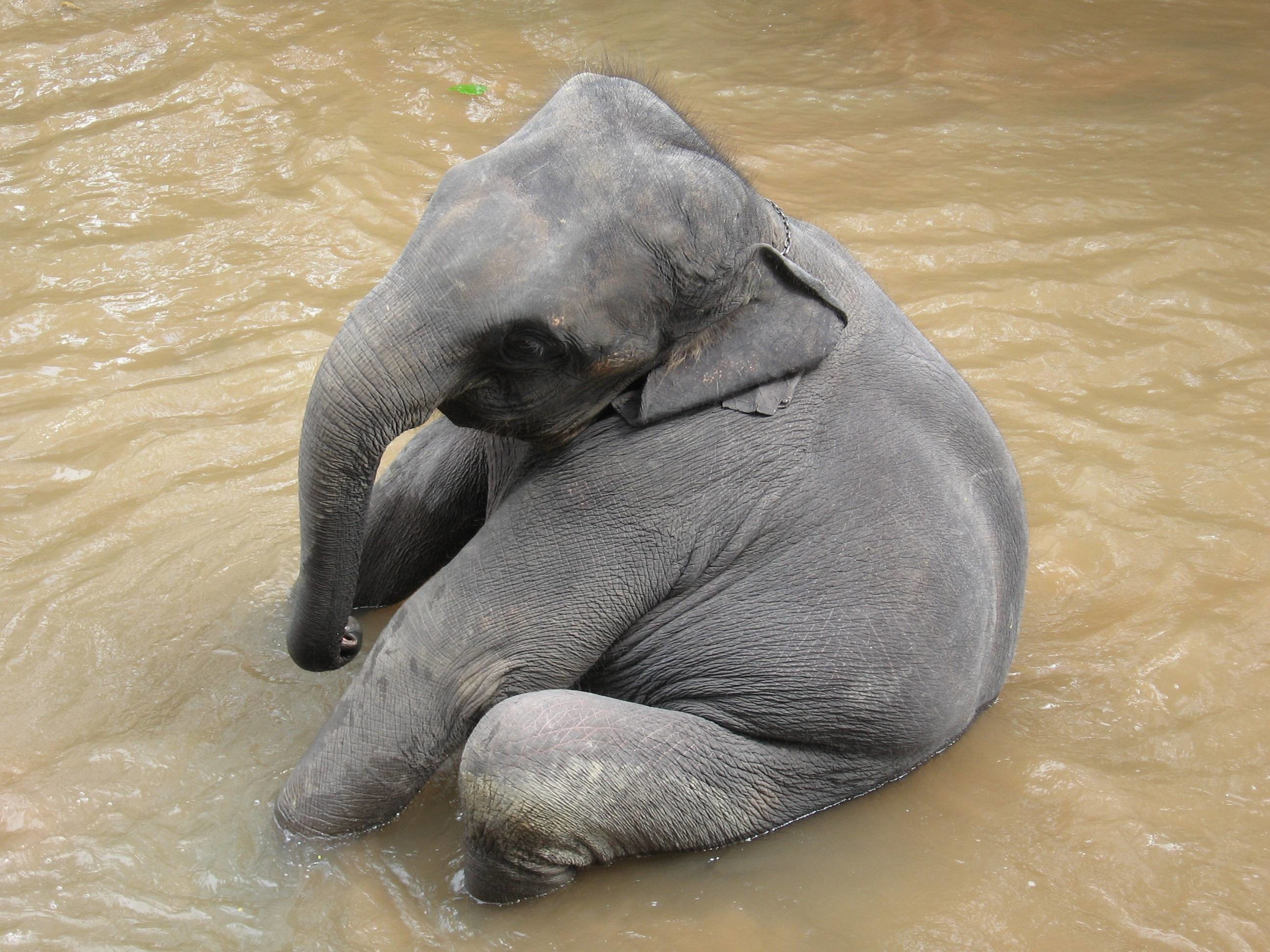 Res: 2592x1944, Elephant HD Wallpapers | Elephant Desktop Wallpapers | Cool Wallpapers