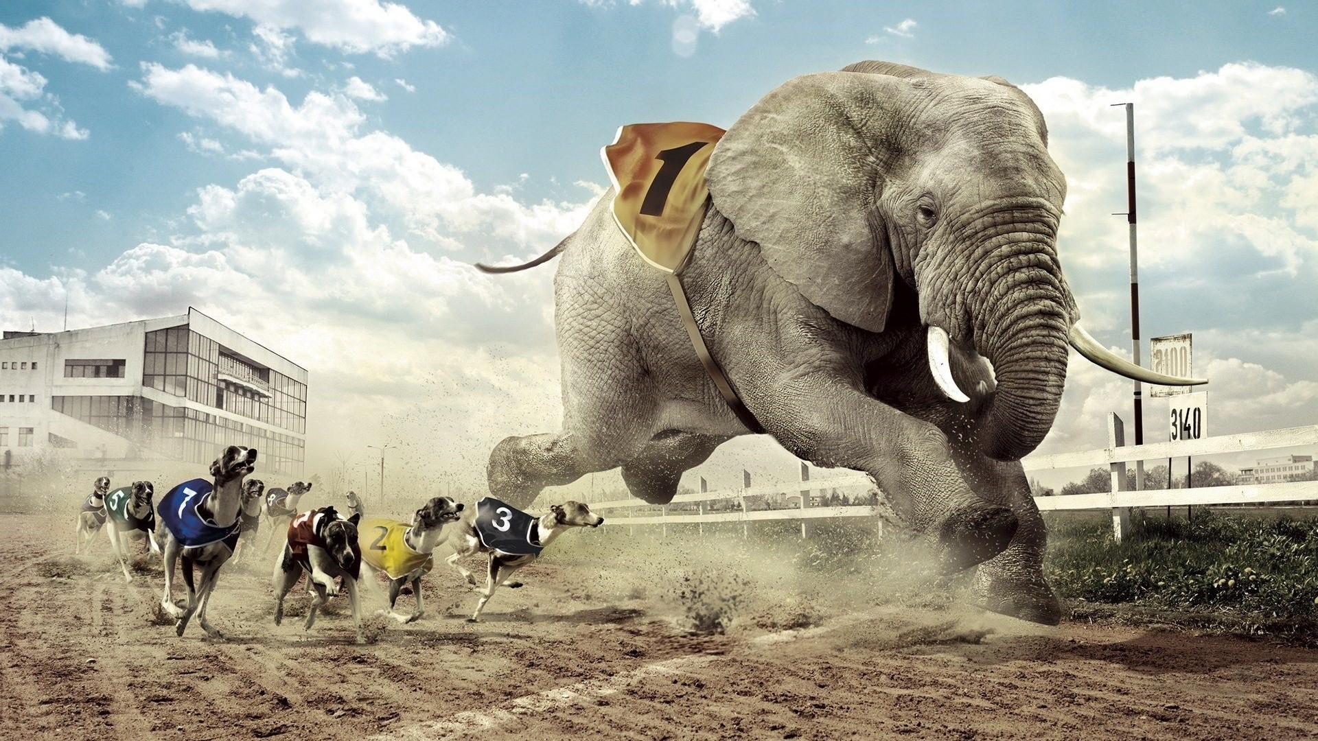 Res: 1920x1080,  Free Elephant Backgrounds | PixelsTalk.Net