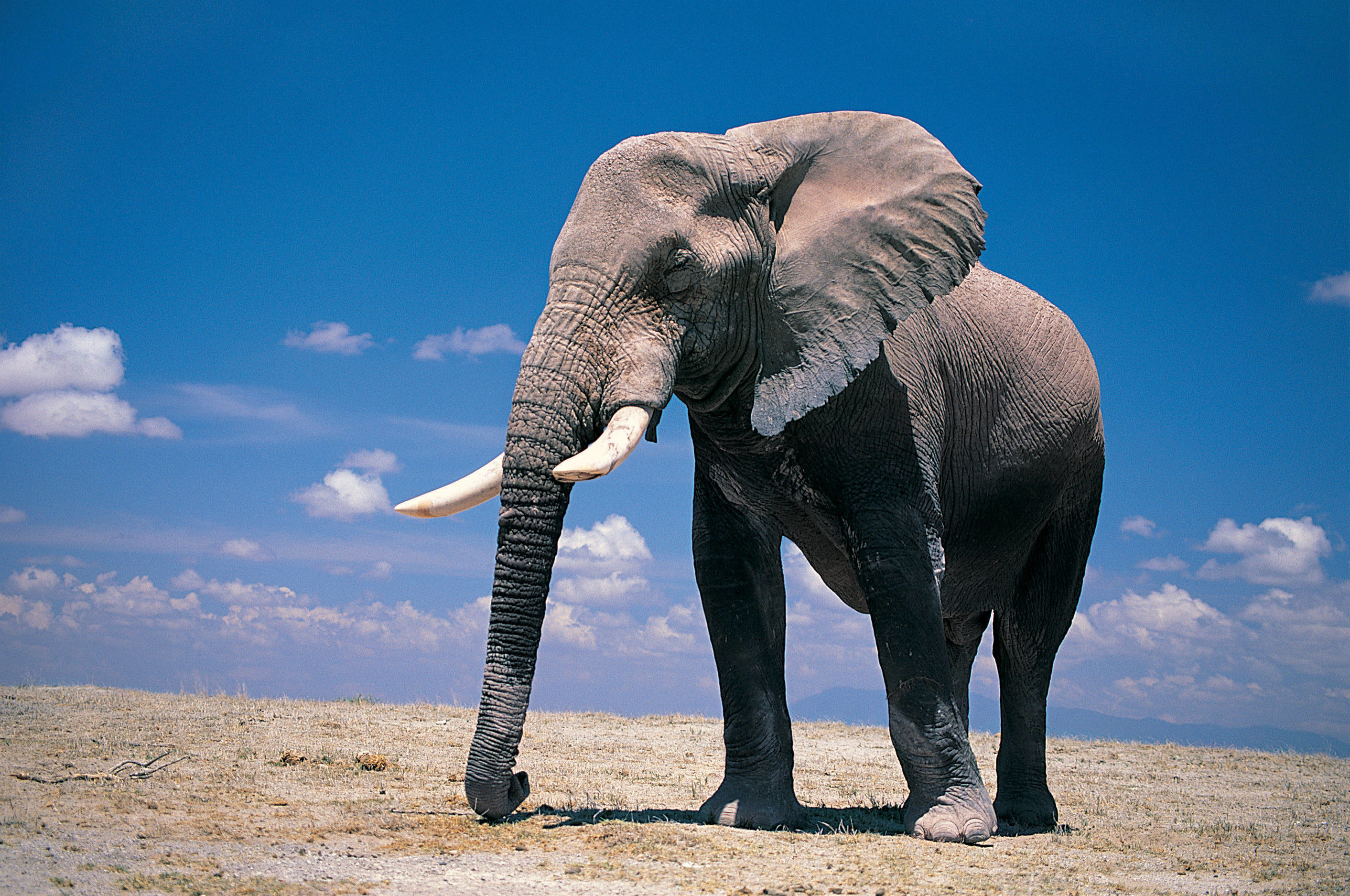 Res: 2825x1875, Elephant Wallpapers Free