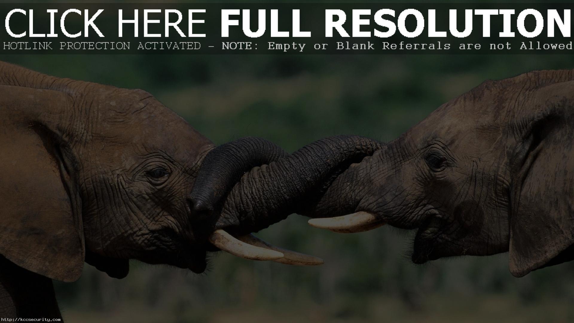 Res: 1920x1080, Elephant Wallpaper 10475