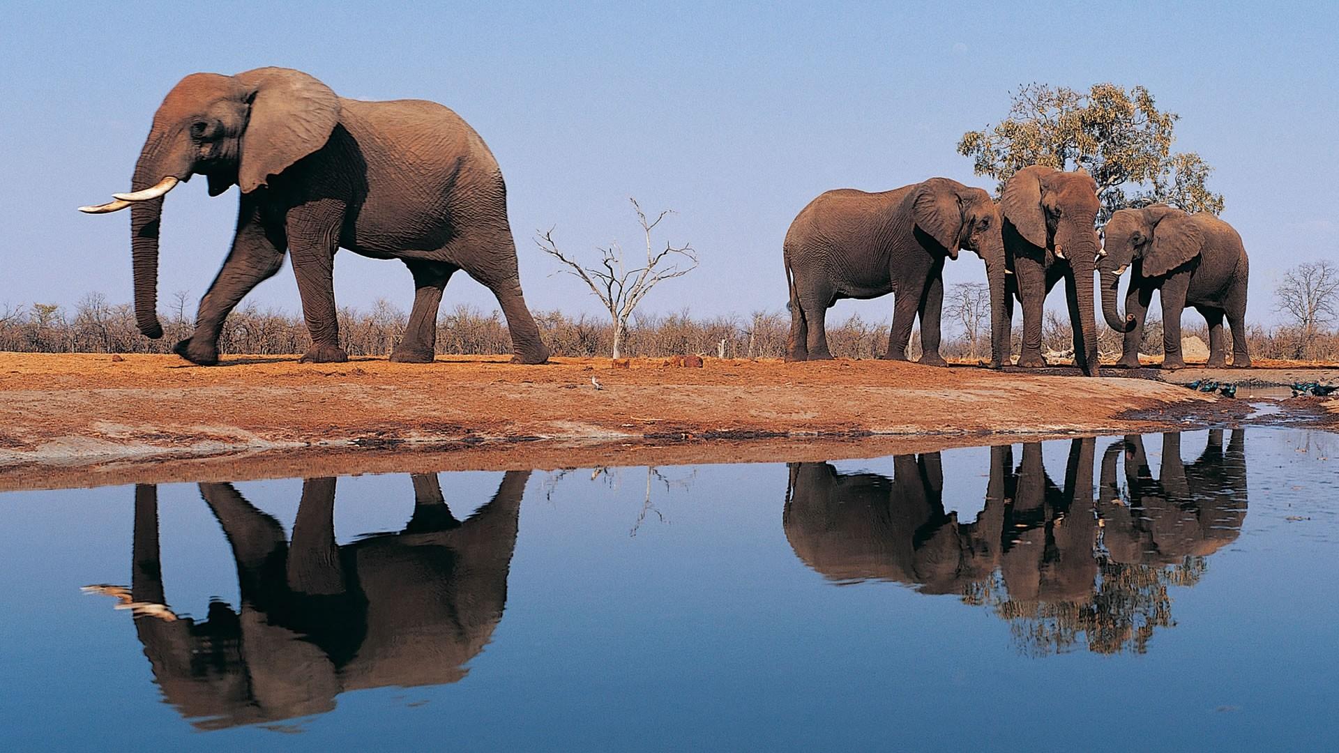 Res: 1920x1080, Elephants Animals HD Desktop Wallpaper