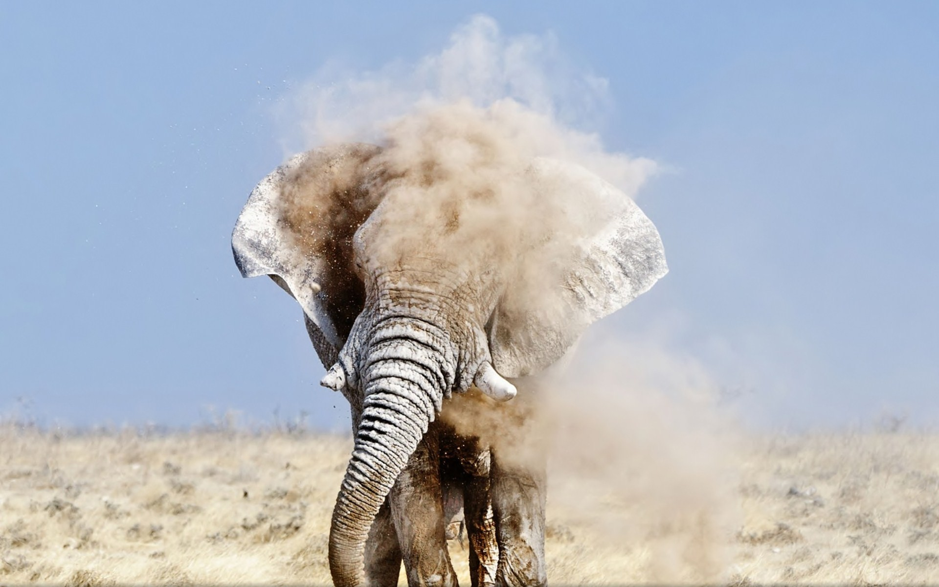 Res: 1920x1200, ... Elephant HD Wallpapers - NSP-High Resolution Background Pictures ...