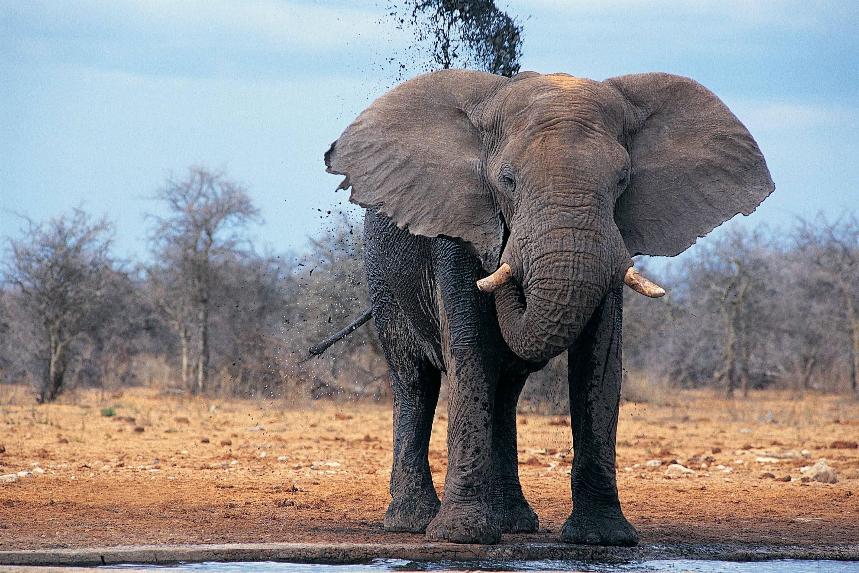 Res: 3000x2000, Best Indian Elephant Desktop Wallpapers