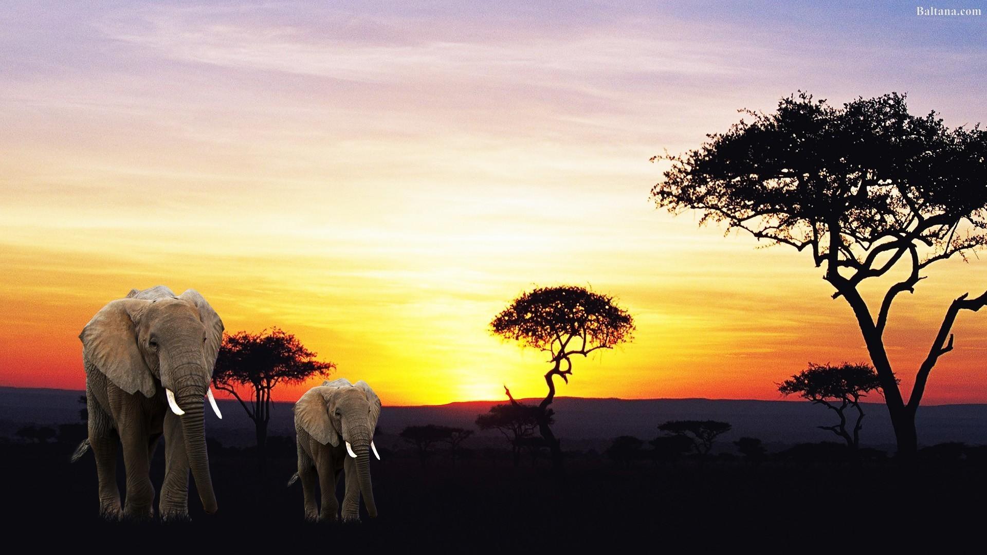 Res: 1920x1080, Elephant Desktop Wallpaper 29724