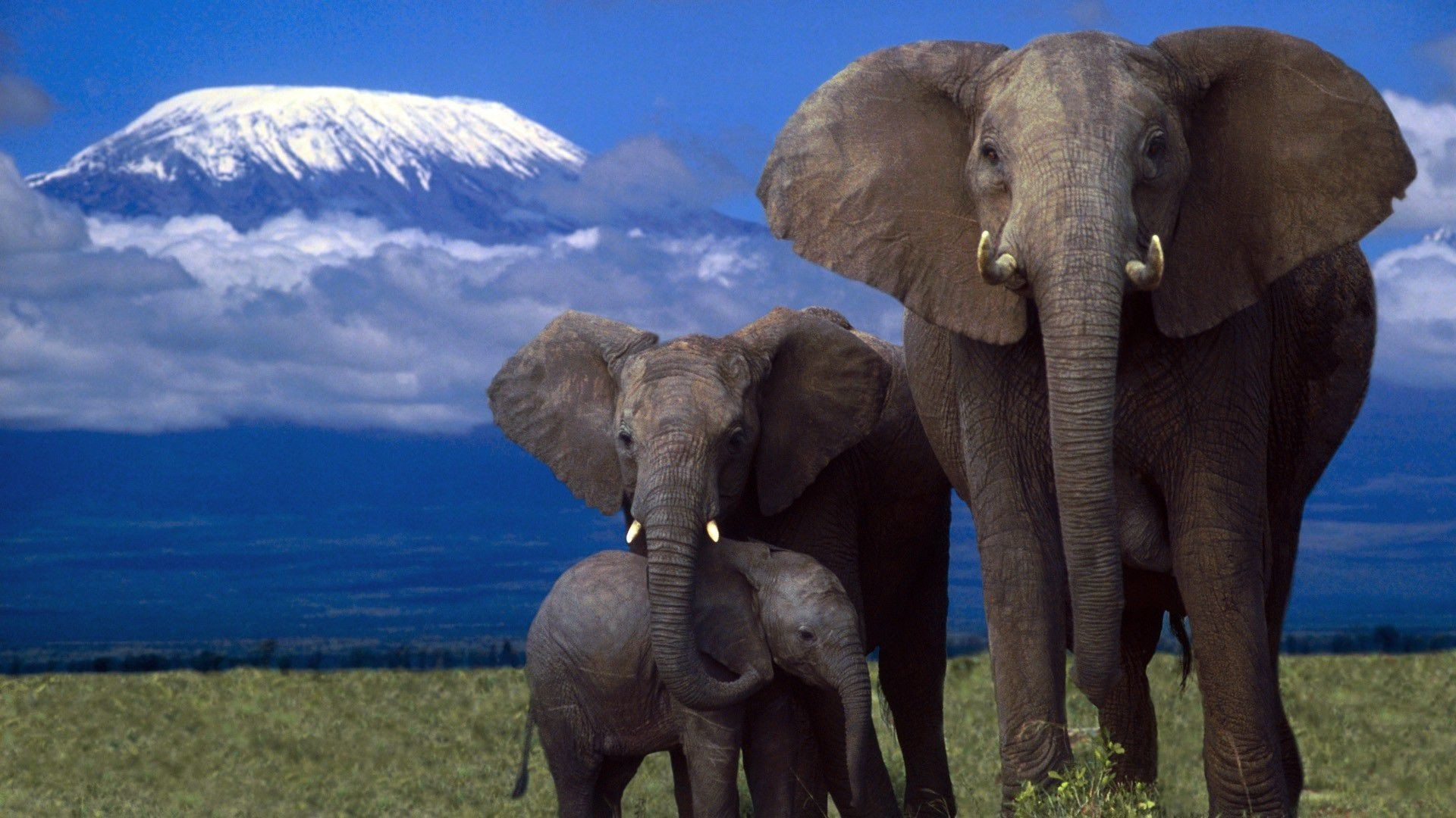 Res: 1920x1080, african elephant hd wallpapers high quality
