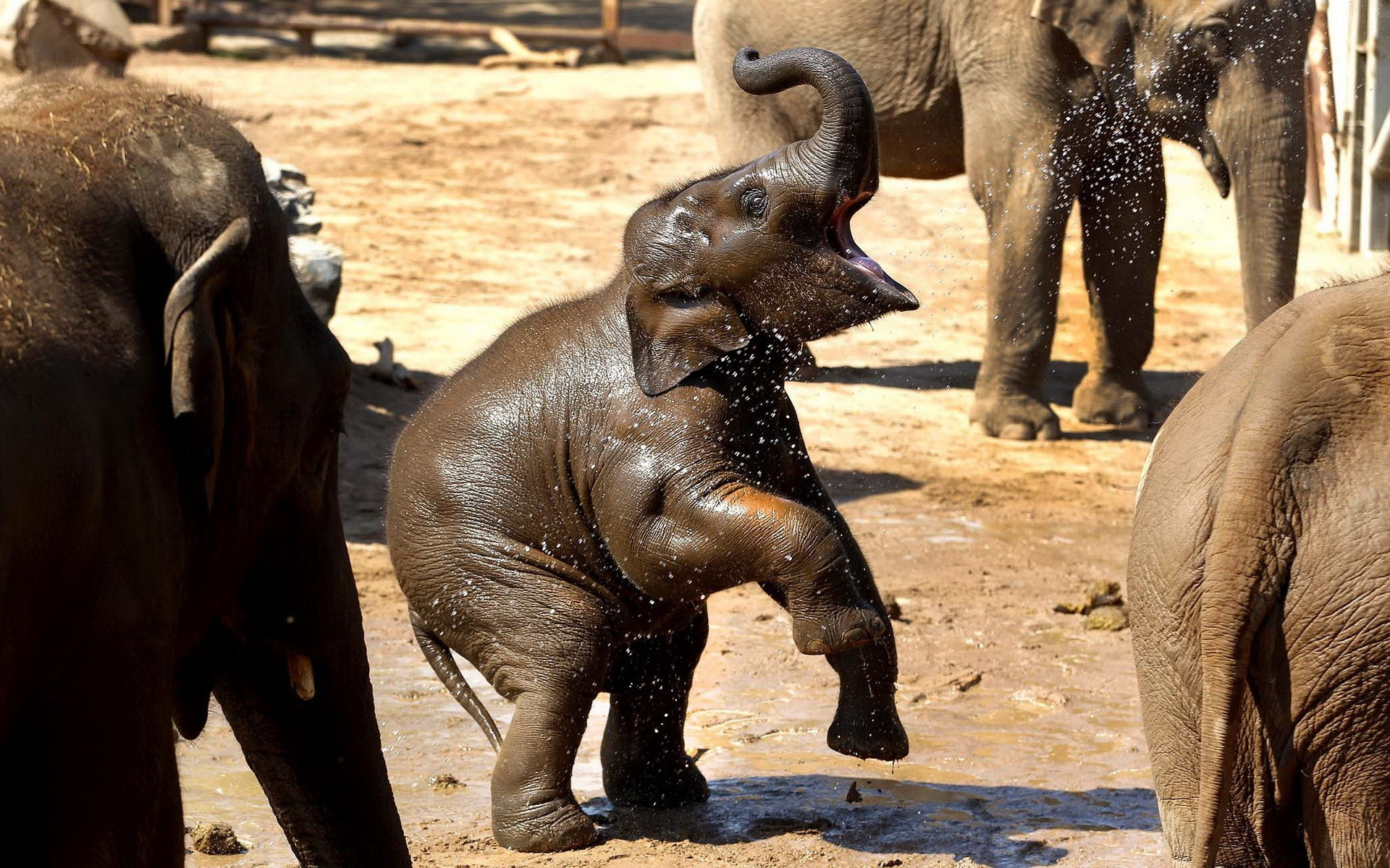 Res: 1920x1200, nature, Animals, Elephants, Baby, Elephant, Baby, Animals Wallpapers HD /  Desktop and Mobile Backgrounds