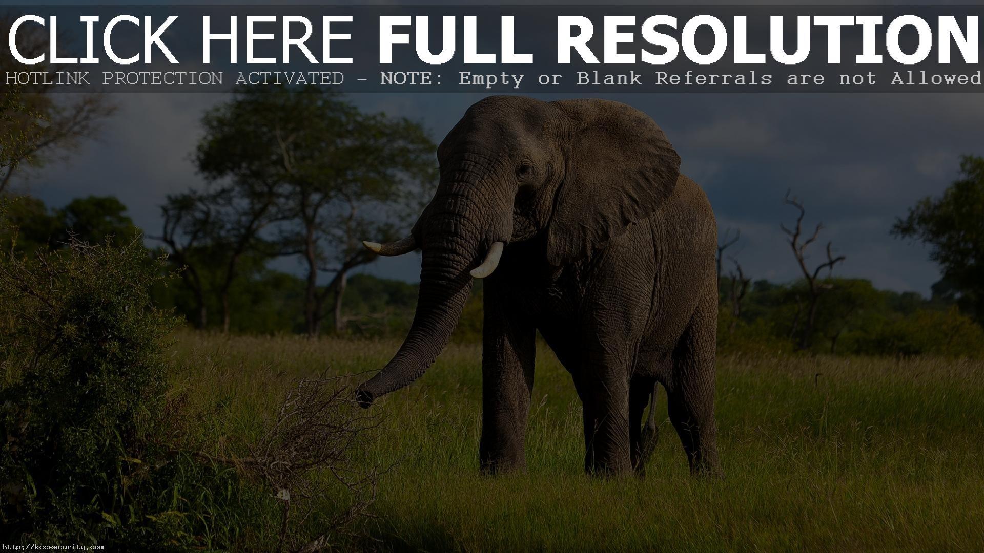 Res: 1920x1080, Elephant Wallpaper 10473