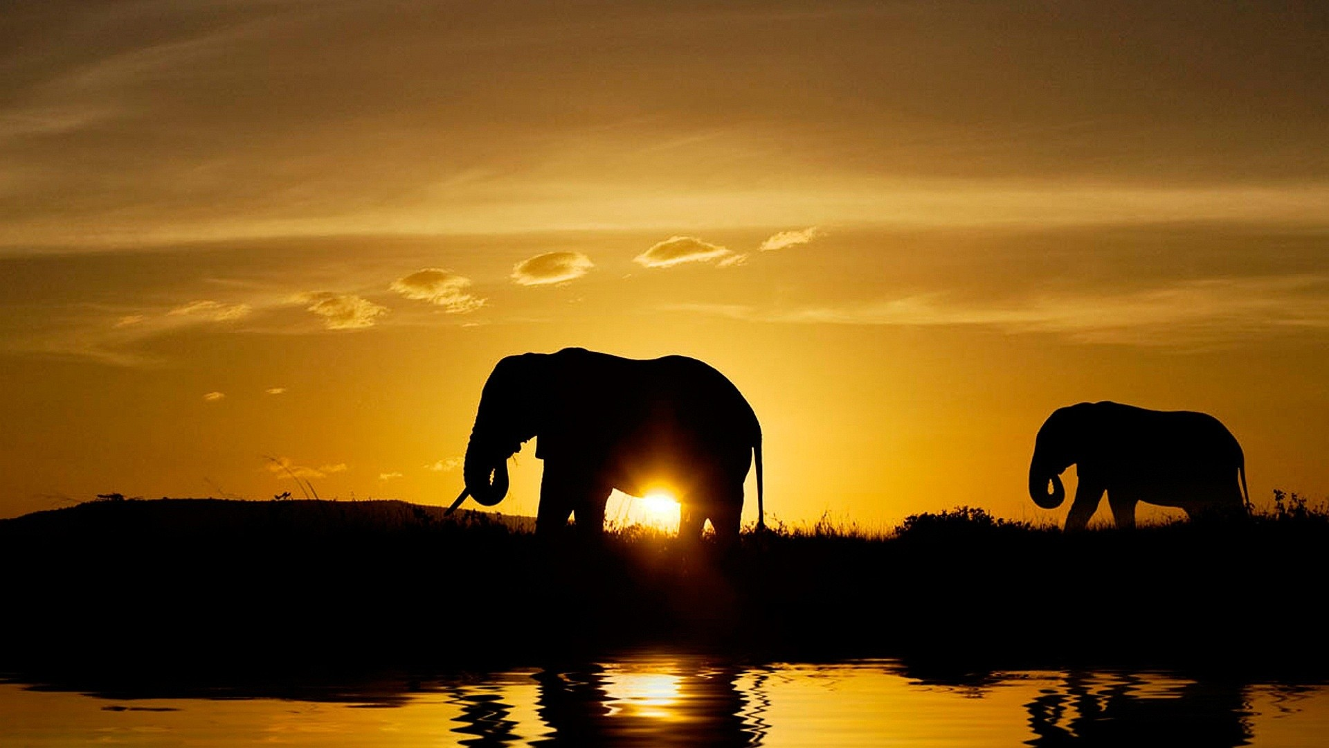 Res: 1920x1080, Elephant-HD Wallpapers Free Download