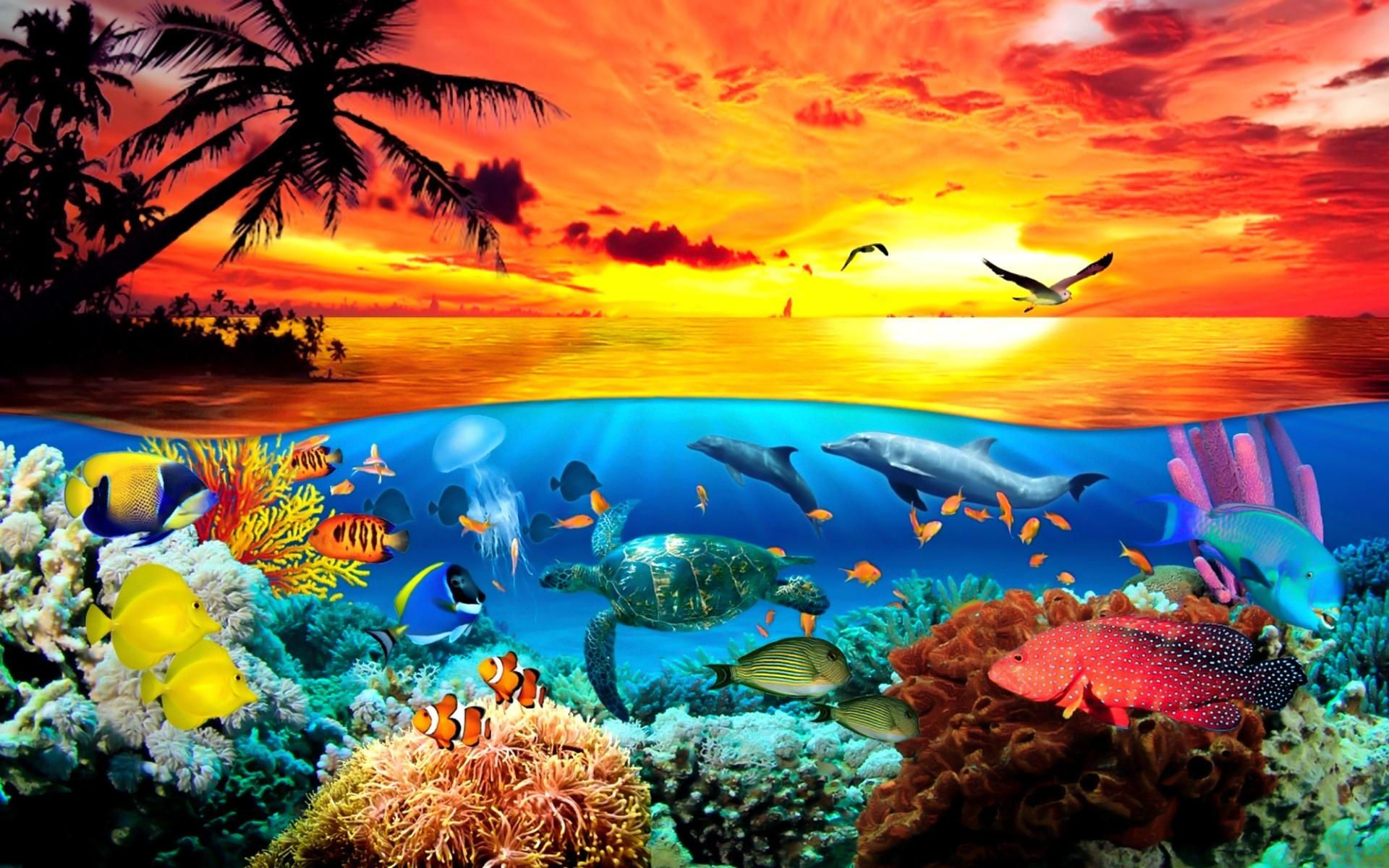 Res: 1920x1200, Under The Sea Animals World Wallpaper - DreamLoveWallpapers